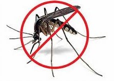 Just say NO- Mosquitos!